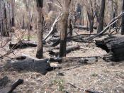 burnt log
